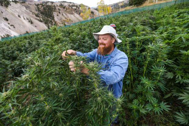 FIVE AREAS IN THE UNITED STATES THAT ARE IDEAL FOR GROWING WEED